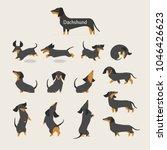 cute dachshund various... | Shutterstock .eps vector #1046426623
