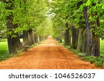 alley in the park in sun rays.... | Shutterstock . vector #1046526037