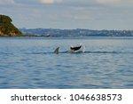 waiheke island  new zealand | Shutterstock . vector #1046638573