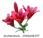 bunch of saturated red pink... | Shutterstock . vector #1046648197