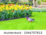 Duck On Green Grass At Flower...