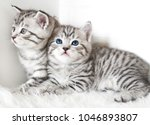 two cute kitten. kittens are... | Shutterstock . vector #1046893807