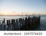 small pier with birds at sunset ...   Shutterstock . vector #1047076633