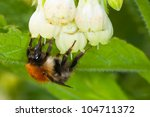 busy bee collecting spring pollen - stock photo