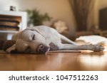 young cute adorable tired... | Shutterstock . vector #1047512263