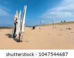 Ghost Forest found along Sleeping Bear Point Trail has dead trees rising from the Sand Dunes, near Glen Haven Michigan