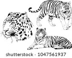 vector drawings sketches... | Shutterstock .eps vector #1047561937