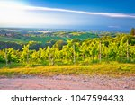 vineyards and green landscape...   Shutterstock . vector #1047594433