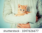 Stock photo cute little red kitten is sitting on hands kitten in the hands red haired kitten soft tone 1047626677