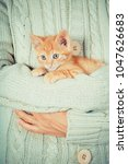 Stock photo cute little red kitten is sitting on hands kitten in the hands red haired kitten soft tone 1047626683