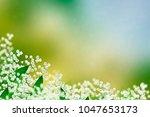 spring landscape. flowers lily... | Shutterstock . vector #1047653173