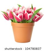 Flower Pot With Pink Tulips  ...
