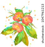 watercolor botanical art.... | Shutterstock . vector #1047961213