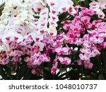 beautiful white violet purple...   Shutterstock . vector #1048010737