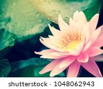 beautiful lotus flower  lily... | Shutterstock . vector #1048062943