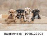 american staffordshire terrier...   Shutterstock . vector #1048123303