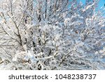 pattern of tree branches... | Shutterstock . vector #1048238737