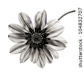 Flower In Black And White On...
