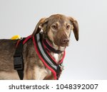 rescue dog portrait. very shy... | Shutterstock . vector #1048392007