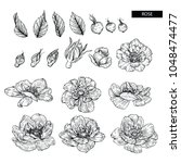 Flower Drawings.  Collection O...