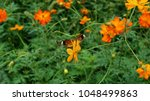 view of butterfly on the...   Shutterstock . vector #1048499863