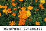spring and summer vibes  close...   Shutterstock . vector #1048501633