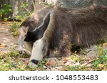 close   up of a wild giant... | Shutterstock . vector #1048553483