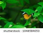 butterfly in the garden | Shutterstock . vector #1048584053