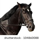 Isolated black horse portrait - stock photo