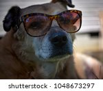 Dog In Wearing Sunglasses In...