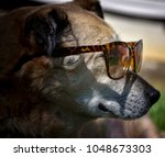 Side View Of A Dog Chilling In...