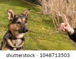 mixed breed dog between german... | Shutterstock . vector #1048713503