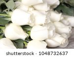 white roses close up | Shutterstock . vector #1048732637