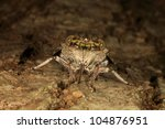 Camouflage of Cicadidan - stock photo
