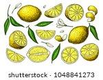 lemon drawing. summer fruit... | Shutterstock . vector #1048841273