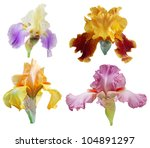 Set Of Colorful Big Iris...