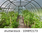 Arched Greenhouse With Tomato...
