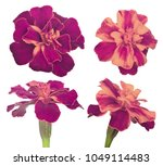 pink and yellow four flower... | Shutterstock . vector #1049114483