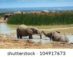 Two Young African Elephants...