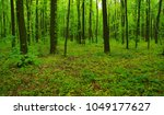 beautiful green forest in spring | Shutterstock . vector #1049177627