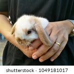 Stock photo white and brown rabbit in hand rabbits are small mammals in the family leporidae of the order 1049181017