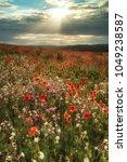 poppy field landscape in summer ... | Shutterstock . vector #1049238587