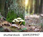 mushrooms in autumn forest on a ... | Shutterstock . vector #1049259947