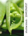 beautiful closeup of green... | Shutterstock . vector #1049296937