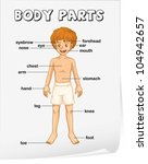 illustration of boy body parts   Shutterstock .eps vector #104942657