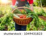 mixed organic vegetable in... | Shutterstock . vector #1049431823