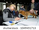 estimating breed. somali cat... | Shutterstock . vector #1049451713