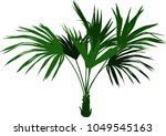 decorative homemade palm tree... | Shutterstock .eps vector #1049545163