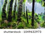 close up image of aquarium tank ... | Shutterstock . vector #1049632973