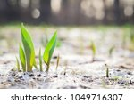 the seedling are growing from... | Shutterstock . vector #1049716307